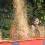 Dschungelcamp – Der Preis ist Reis – Melanie bekommt alles ab