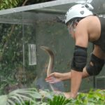 Dschungelcamp – Dschungelprüfung 10 – Marco Angelini und die Schlange