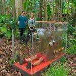 Dschungelcamp – Jochen Bendel im Kakerlaken-Sarg