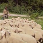 Bauer sucht Frau 2014 - Folge 2 - Heike und Rainer beim Schafetreiben