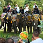 DSDS 2015 - Die Jury bewegen sich mit Elefanten fort