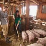 Bauer sucht Frau 2014 - Janine hilft Rolf beim Strohverteilen