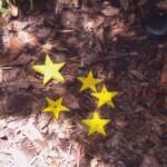 Dschungelcamp 2015 Dschungelprüfung 11 - Rolfe erspielt fünf Sterne