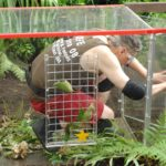 Dschungelcamp 2015 Dschungelprüfung 13 - Rolfe darf nur durch den Tunnel krabbeln