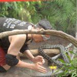 Dschungelcamp 2015 Dschungelprüfung 13 - Rolfe bei den Schlangen