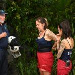 Dschungelcamp 2020 Dschungelprüfung Tag 2 - Dr. Bob, Danni Büchner und Elena Miras
