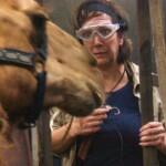 Dschungelcamp 2020 Dschungelprüfung Tag 3 - Danni Büchner bei den Kamelen