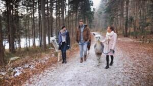 Der Bachelor 2021 Folge 7 - Niko, Karina und Stephi bei einer Alpakawanderung