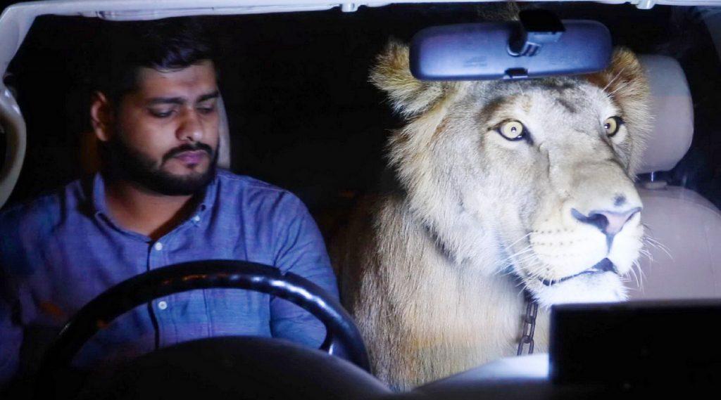 Ein Taxifahrer in Pakistan zieht einen Löwen groß. Jetzt will er sich nicht mehr von dem Tier trennen und nimmt ihn oft mal mit bei der Arbeit. Ob sich das positiv auf sein Geschäft auswirkt? Eine artgerechte Haltung ist es jedenfalls nicht.