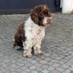 Niklas Osterlohs Hund Herrmann