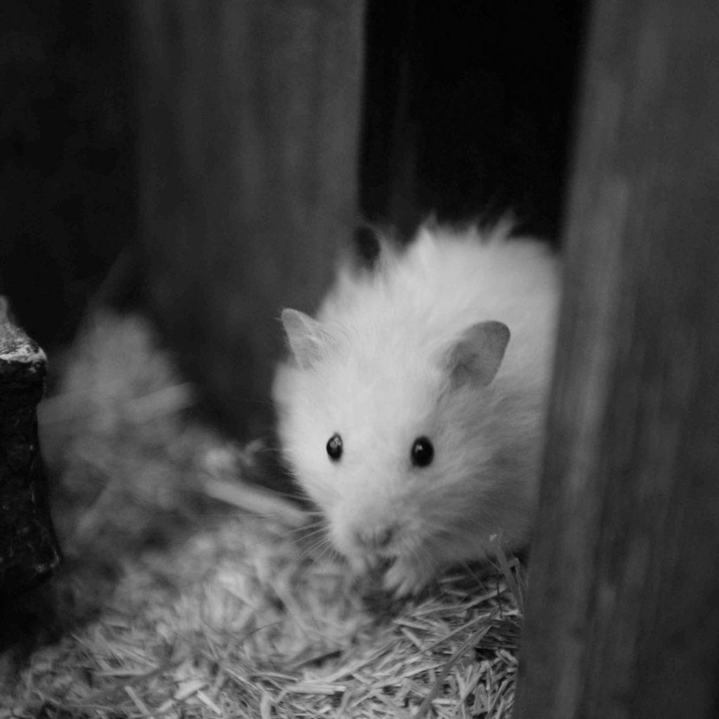 """""""Leider ist Little Bro nach über drei Jahren und einem erfüllten Hamsterleben gestorben."""""""