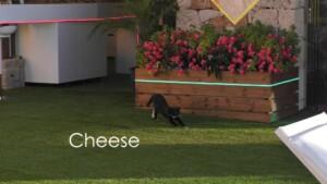 Love Island 2021 Tag 11 - Villa-Katze Cheese