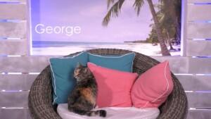 Love Island 2021 Tag 11 - Villa-Katze George