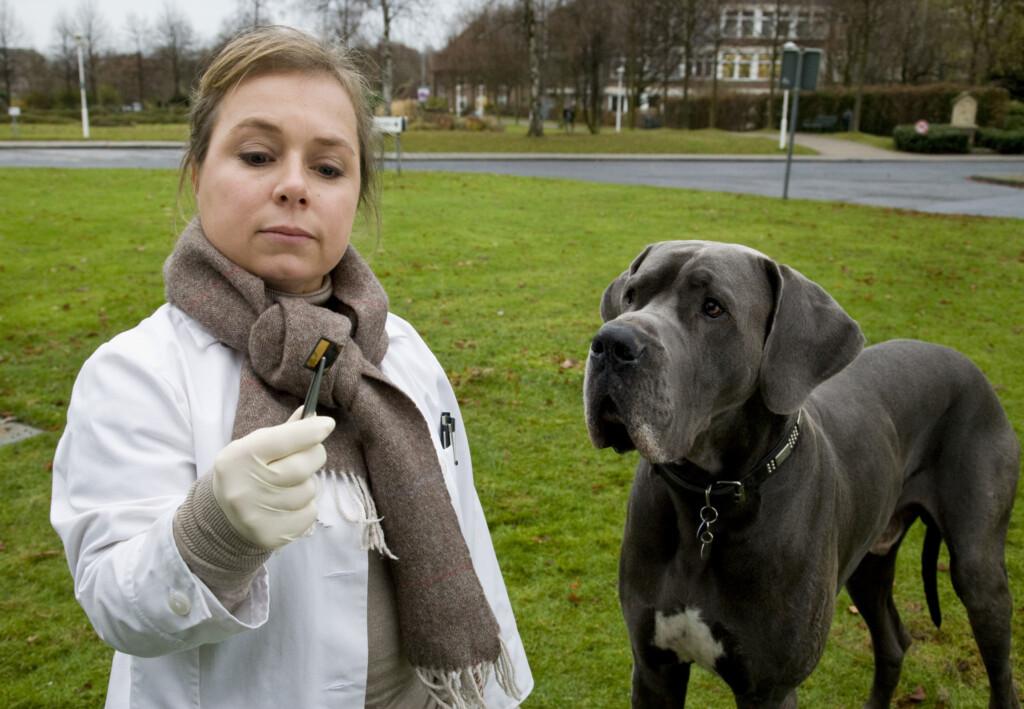 """Dass der Hund in der Größe eines Kalbes den Pathologiealltag ganz schön durcheinander bringt, nimmt Silke Haller alias """"Alberich"""" (ChrisTine Urspruch) mit Humor."""